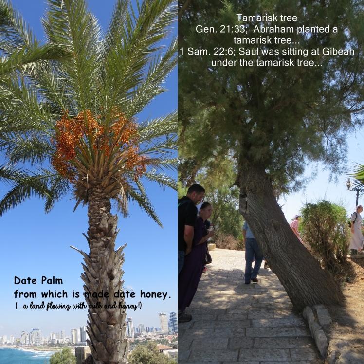 Israel 2016 Day 1.jpg2.jpg