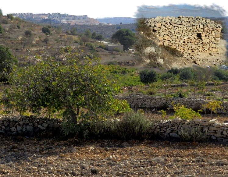 Israel Day 13.No3.jpg